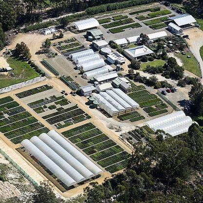Wholesale Native Plant Production